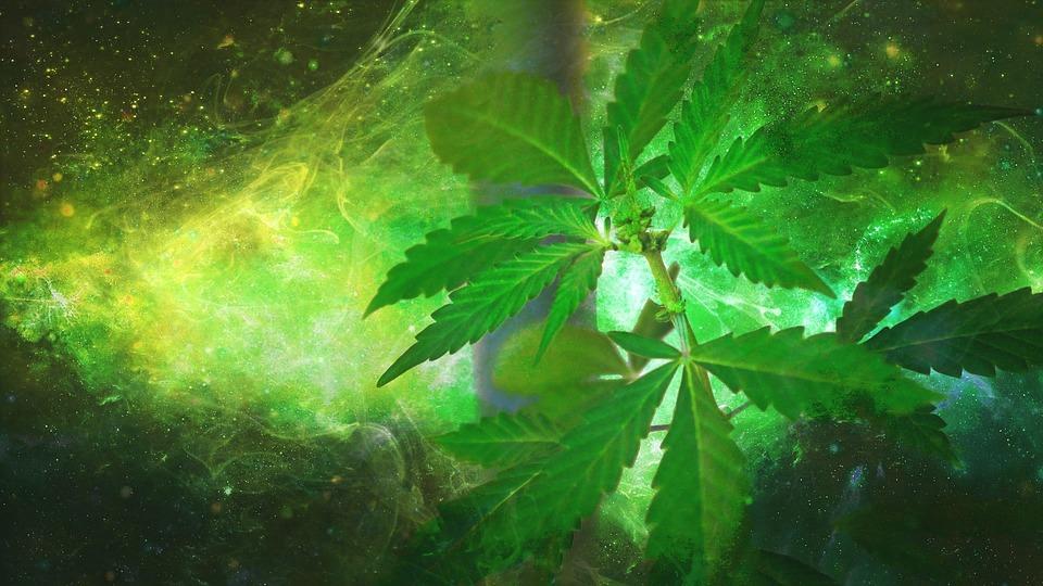 Is Weed Legal in Australia