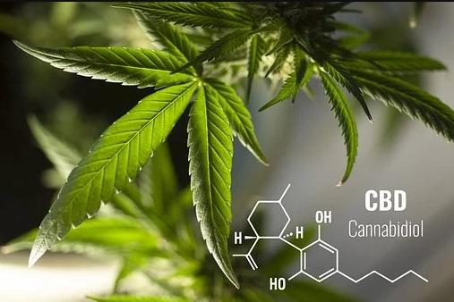 cbd oil canberra